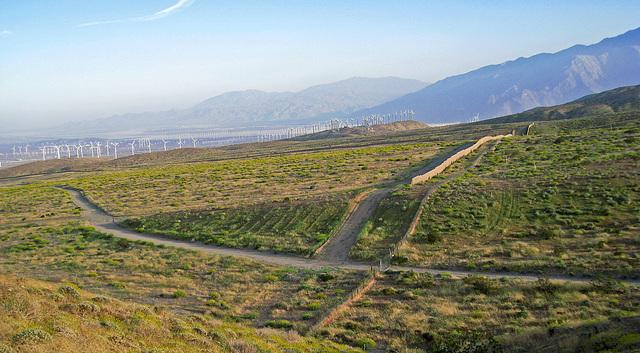 Coachella Valley (0554)