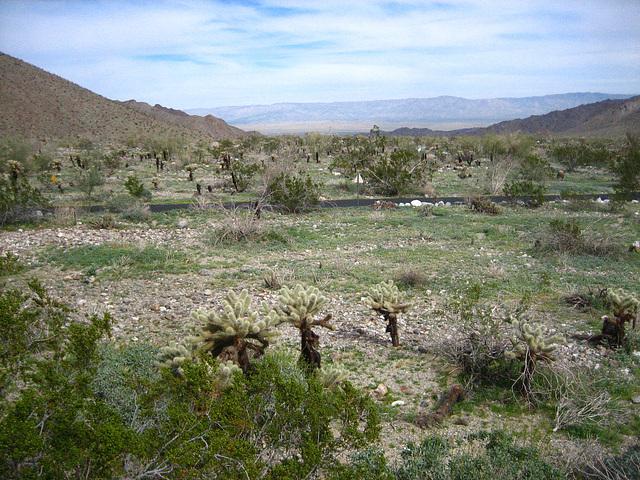 Boyd Deep Canyon (9257)
