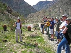 Boyd Deep Canyon (9282)