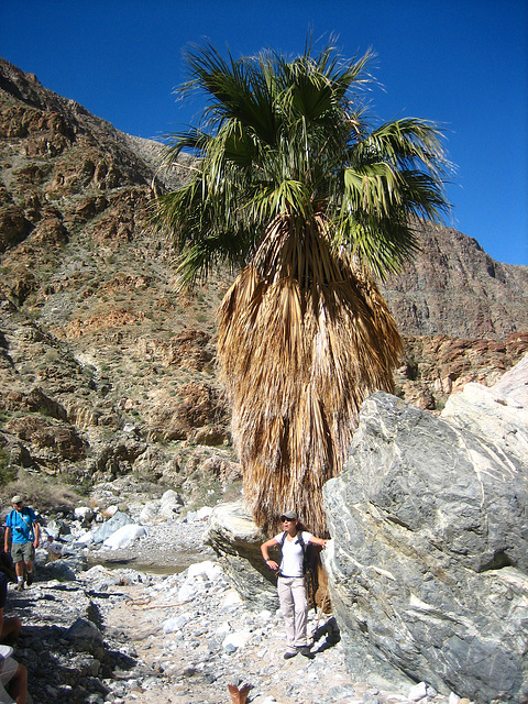 Boyd Deep Canyon (9326)