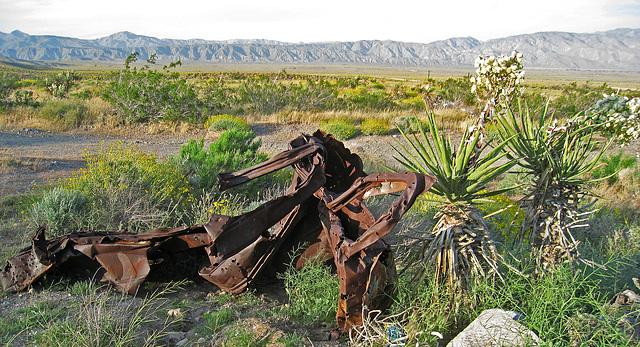 Yuccas (0546)