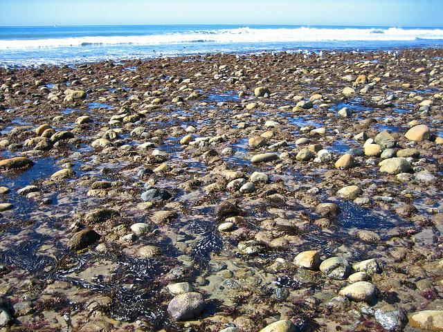 San Onofre Beach (9187)