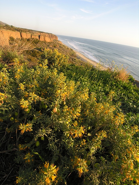 San Onofre Beach From Trail 1 (7105)