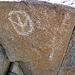 Corn Spring Petroglyph (1245)