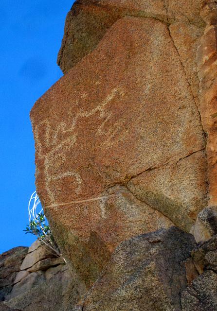Corn Spring Petroglyph (9045)