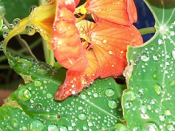 Raindrops on these flowers are brilliant