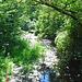 Wood stream / Ruisseau de boisé