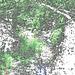 Wood stream  /  Ruisseau de petit boisé - Colourful outlines / Contours de couleur avec photofiltre