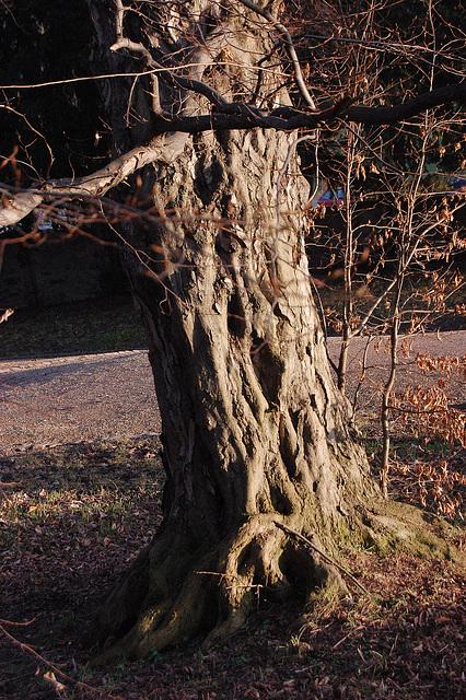 Vigla lumo sur mistera arbo Lebhaftes Licht auf mysteriösem Baum