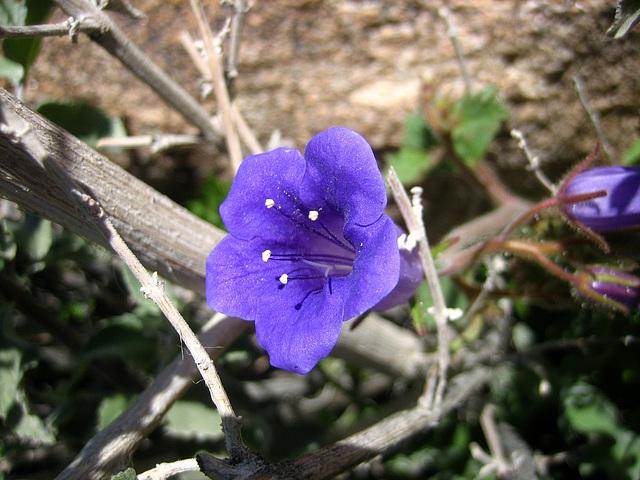 Wildflower (9068)