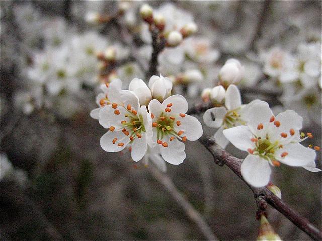 Printemps - spring
