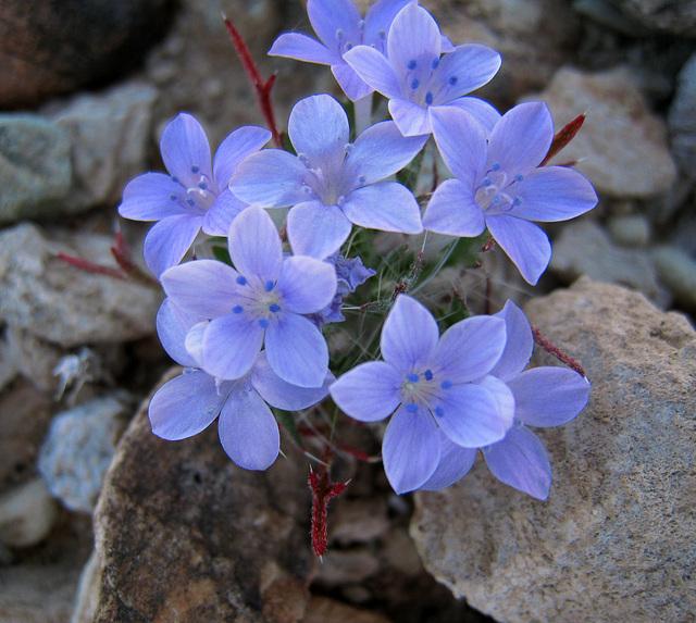 Flowers (0424)