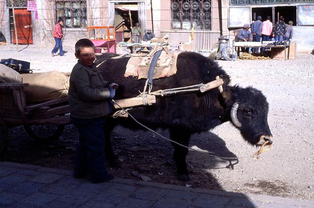 yak et l'enfant