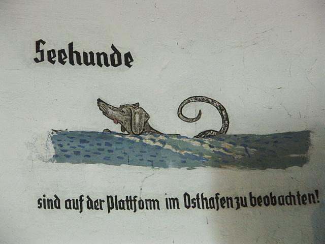 Seehund(e)