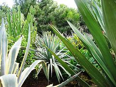 Algarve, Zoo Garden of Lagos, cactus (2)