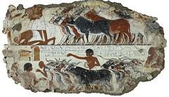 Les bœufs - Sépulture de Neb Amun