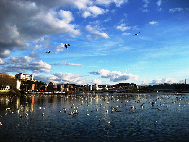 Coimbra, River Mondego, seagulls