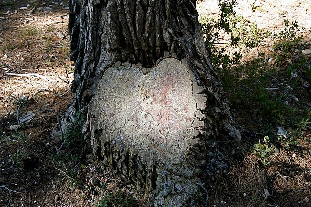 Un coeur - arbre