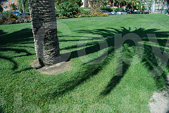 shadow of palm tree