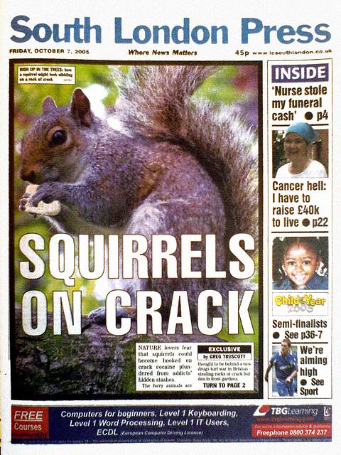 Crack squirrel 2