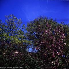 Spring Colors, Strahov, Prague, CZ, 2007