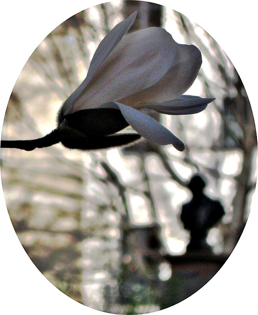 Blossom and Bard
