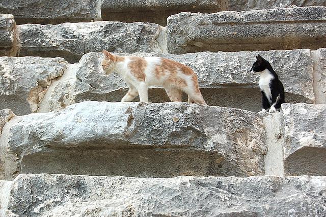Katoj en Aspendos