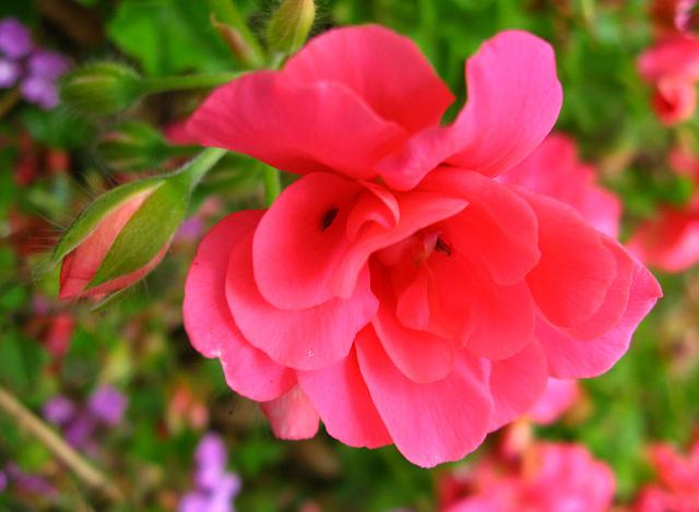 Flowers (1530)