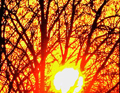 At sunset dark against the fiery orb*