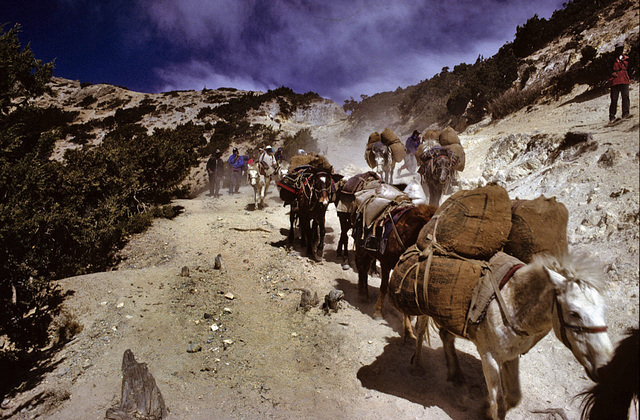 Other caravans passing the old salt route