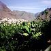 DSCN3249 Plantagen und Calera