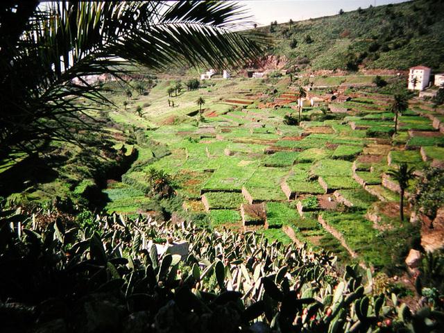 Terrassenfelder von Arure