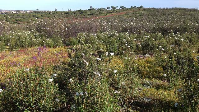 Alentejo florido em Abril - 2