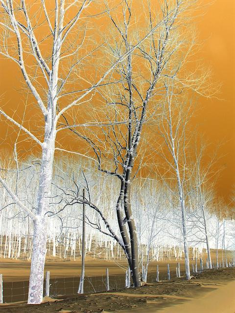 Paysage d'hiver au Québec / St-Benoit-du-lac -  Février 2009. Effet négatif / Negative effect