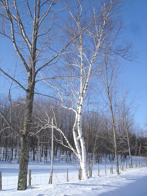 Paysage monastique de l'hiver québécois.