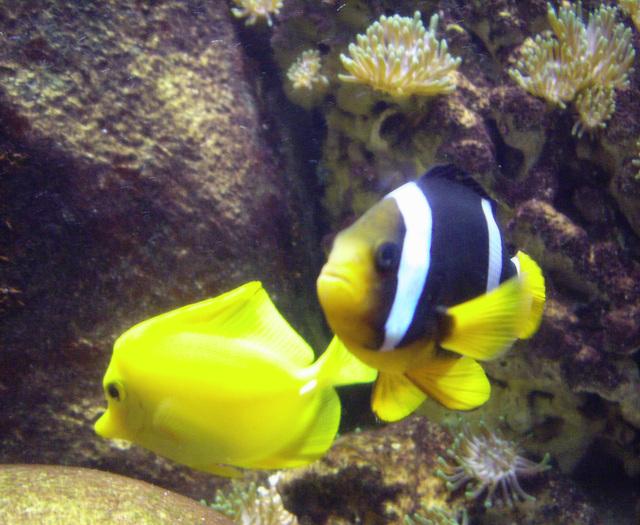Fische in einem Sea Live Aquarium