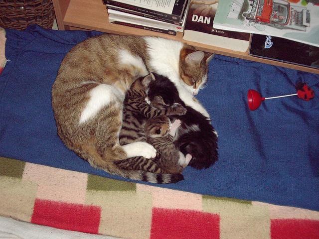 maman et petits