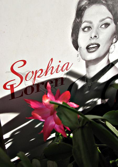 Sophia e fiore