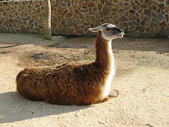 Algarve, Zoo Garden of Lagos, don't be so vane