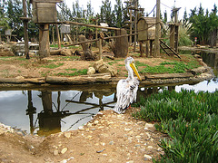 Algarve, Zoo Garden of Lagos, dreaming of fresh fish