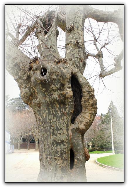 Les arbres ont des oreilles