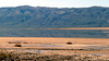 Panamint Valley (3181)