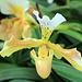 Orchideenaustellung auf der Insel Mainau