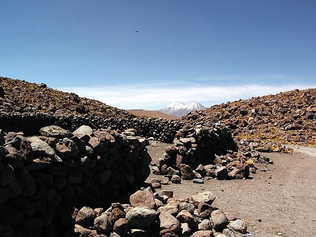 Altiplano et Condor