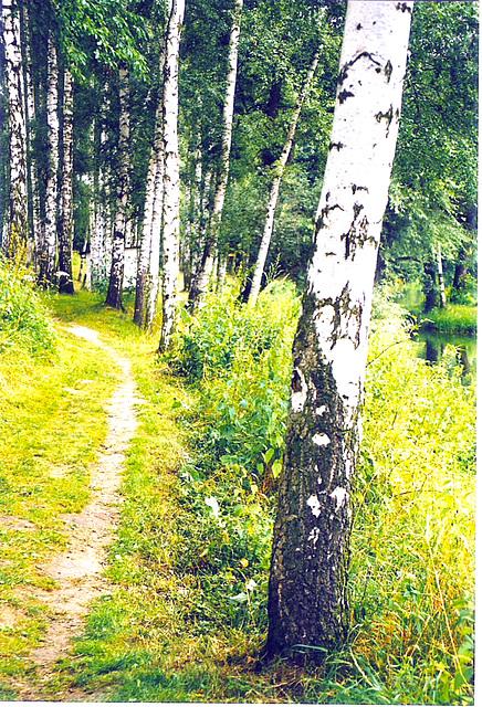 Birkenweg in Aga
