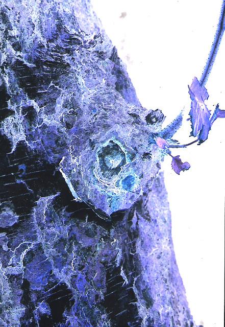 Blue dog in a tree II