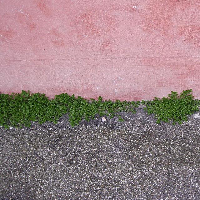 longline greenspot