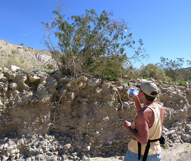 Observing Creosote Roots (7139)