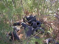 Tires in Tamarisk (7155)