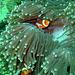 Nemo is looking